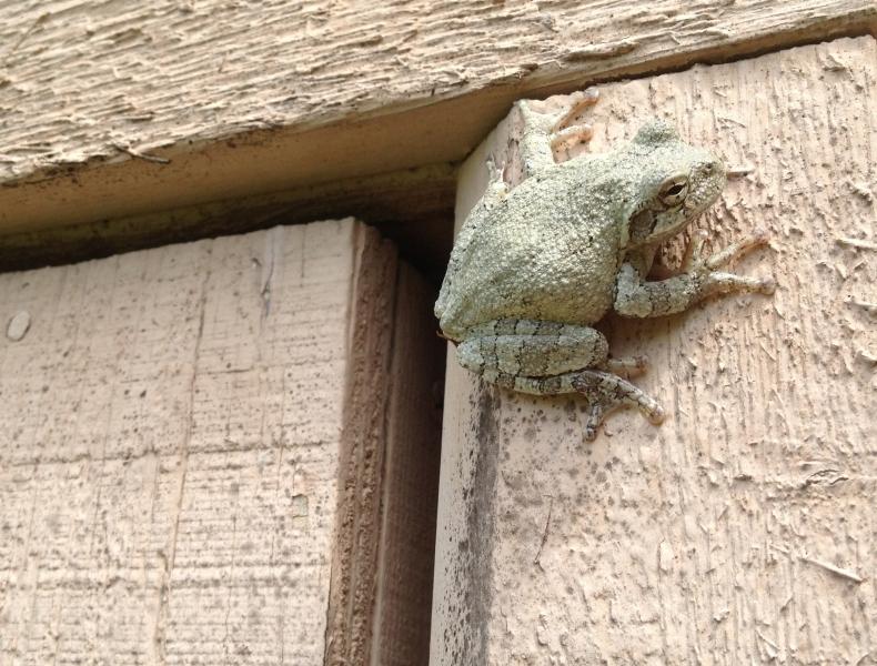 Backyard Friend
